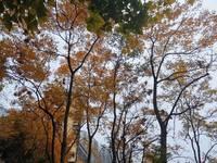 出售巴蜀花园A区电梯房,单价低于市场价,屋里精装修,优质房源!